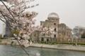 原爆ドームと桜(1)