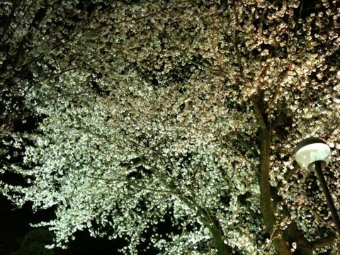 f:id:himagurashi:20100406231027j:image