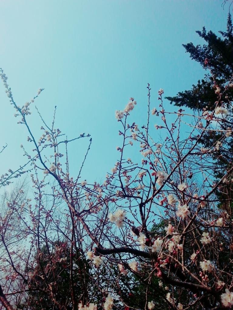 f:id:himawari0619:20170320003436j:plain
