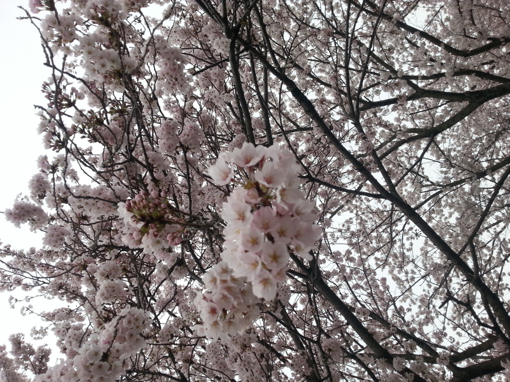 f:id:himawari0619:20170412205753j:plain