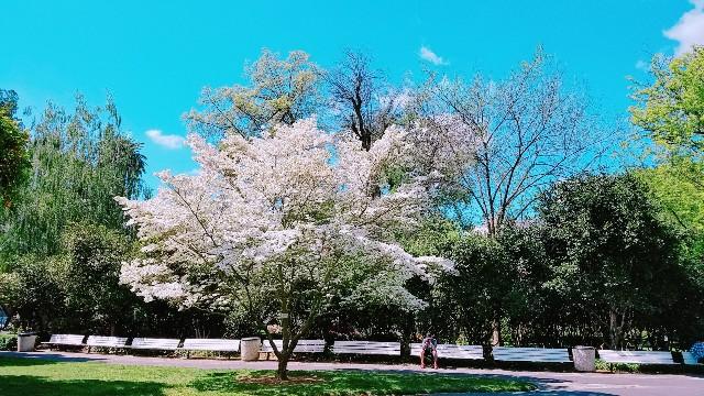 f:id:himawari0619:20190425023800j:image