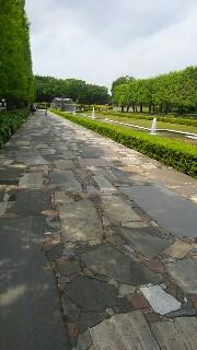 f:id:himawari0growing:20170507120359j:image