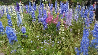 f:id:himawari0growing:20170507154624j:image
