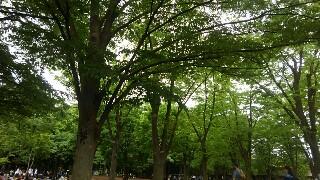 f:id:himawari0growing:20170514122300j:image