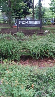 f:id:himawari0growing:20170514133102j:image