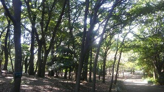 f:id:himawari0growing:20171009111605j:image