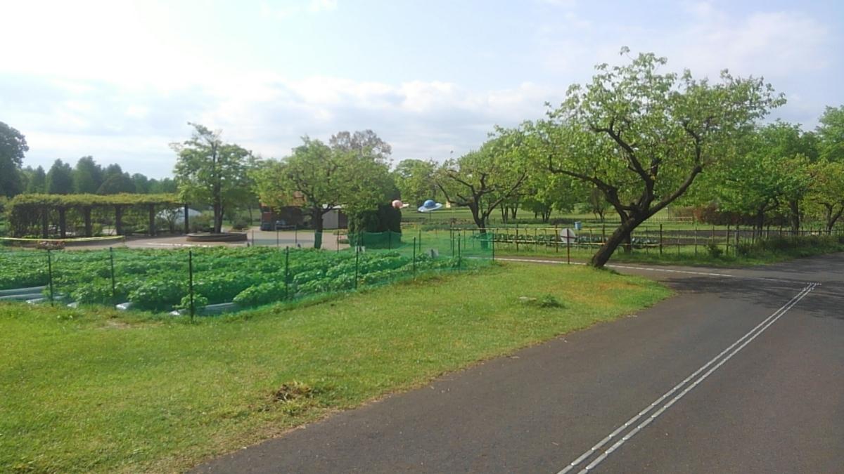f:id:himawari0growing:20190502084008j:plain