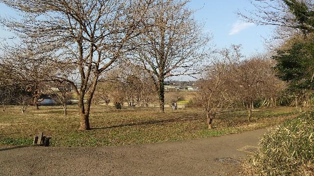 f:id:himawari0growing:20210207151355j:image