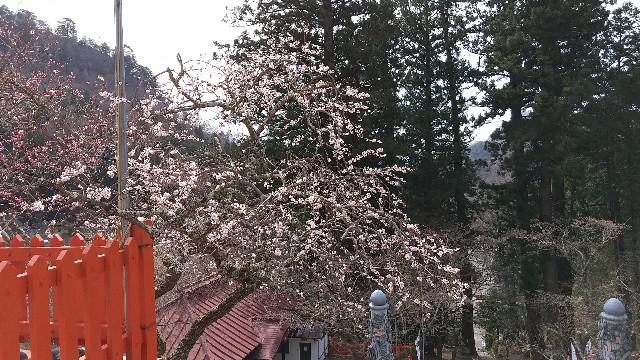 f:id:himawari0growing:20210327095223j:image
