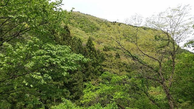 f:id:himawari0growing:20210504125922j:plain