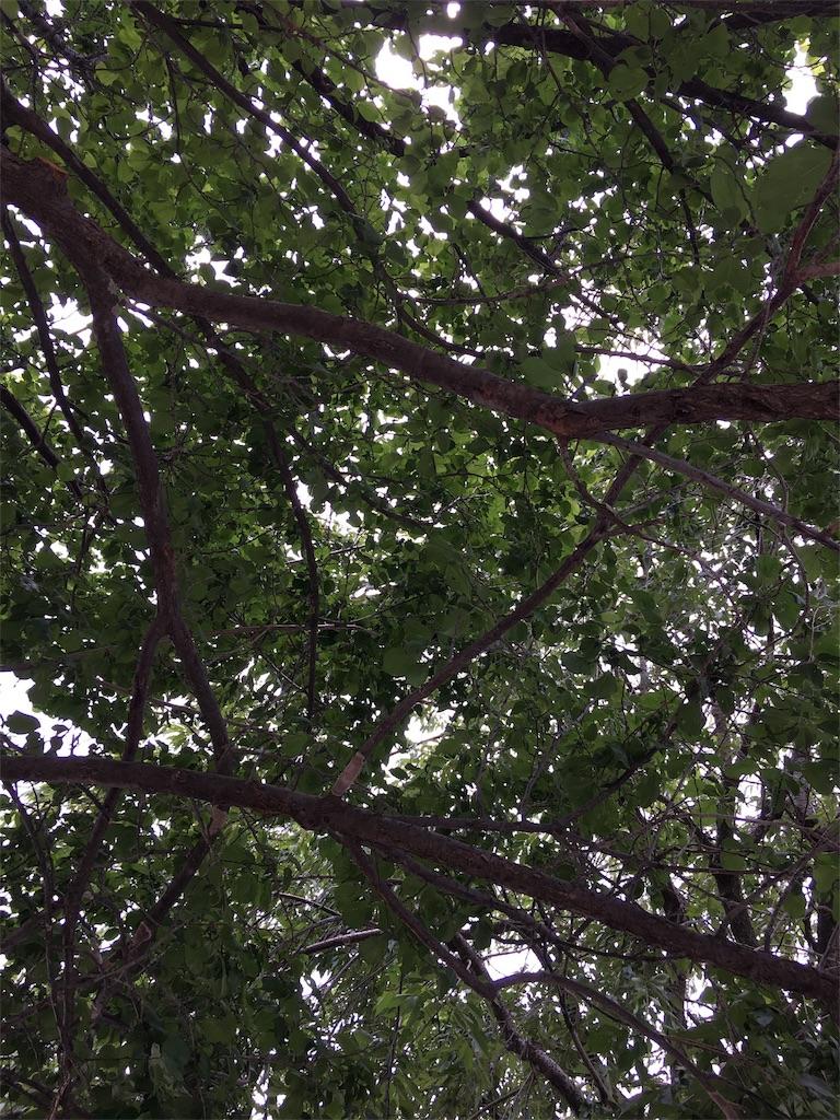 f:id:himawari2016:20170608101823j:image