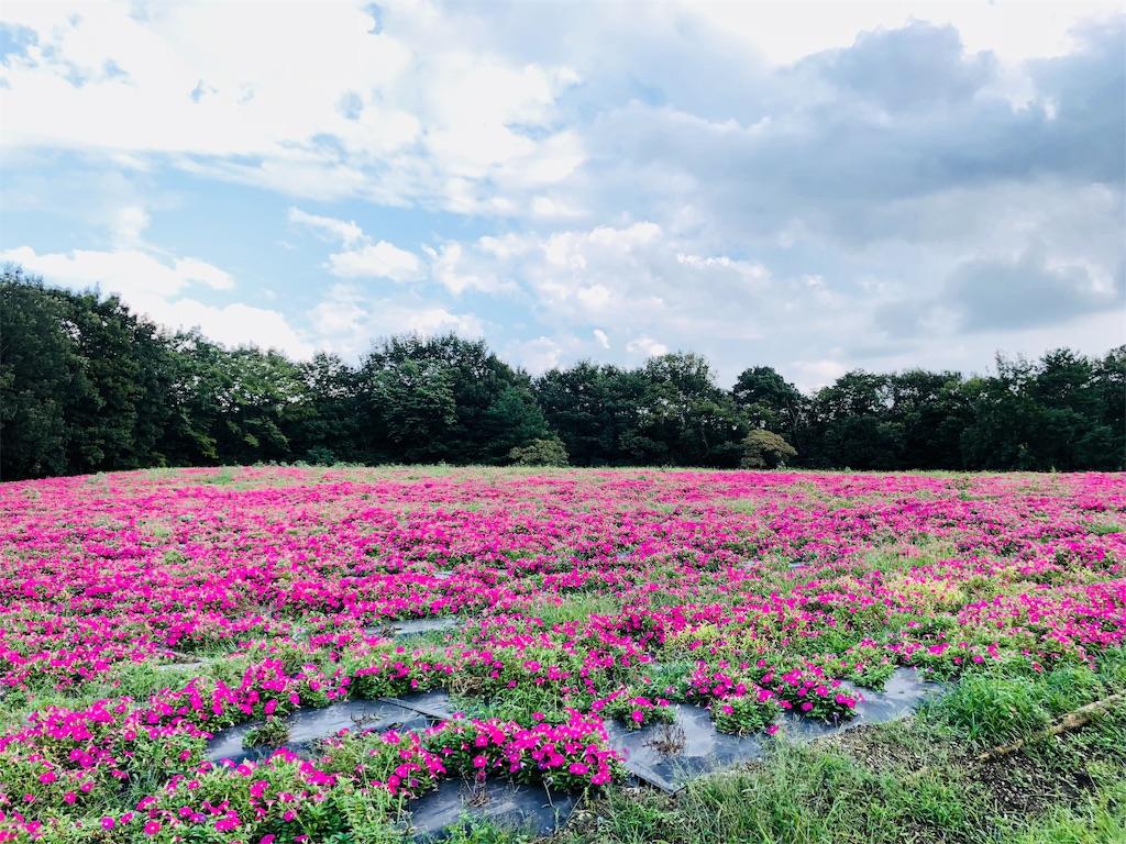 f:id:himawari2016:20181003132705j:image