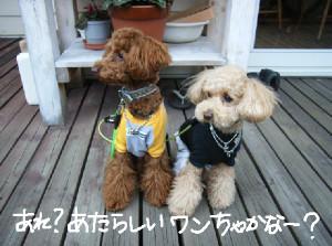 f:id:himawari39:20080530000636j:image