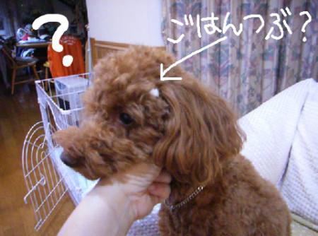 f:id:himawari39:20080530221728j:image