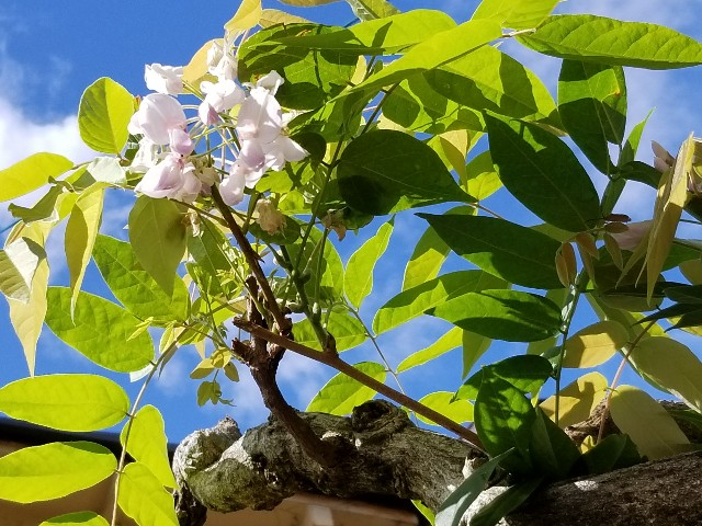 f:id:himawari6039:20200804055701j:image