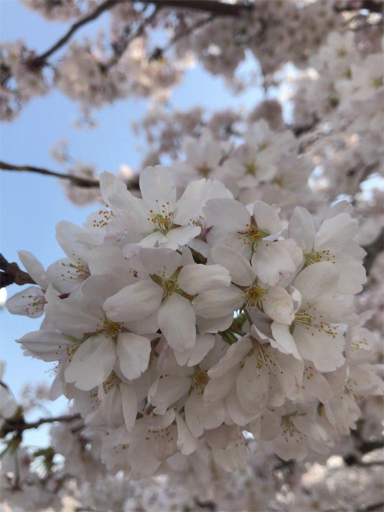 f:id:himawari808:20180327174521j:image