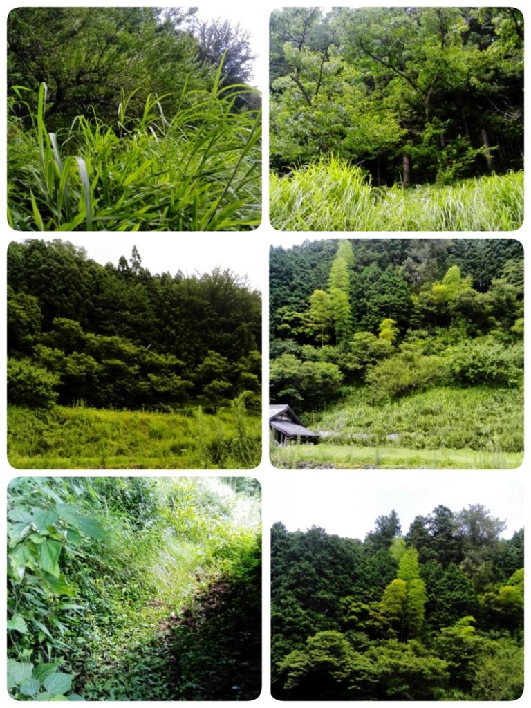 f:id:himawari87k:20160716155610j:plain