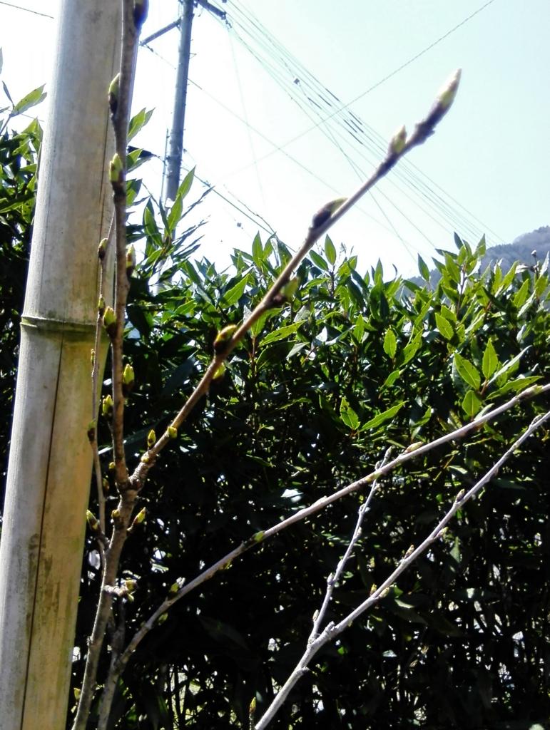 f:id:himawari87k:20170408140501j:plain