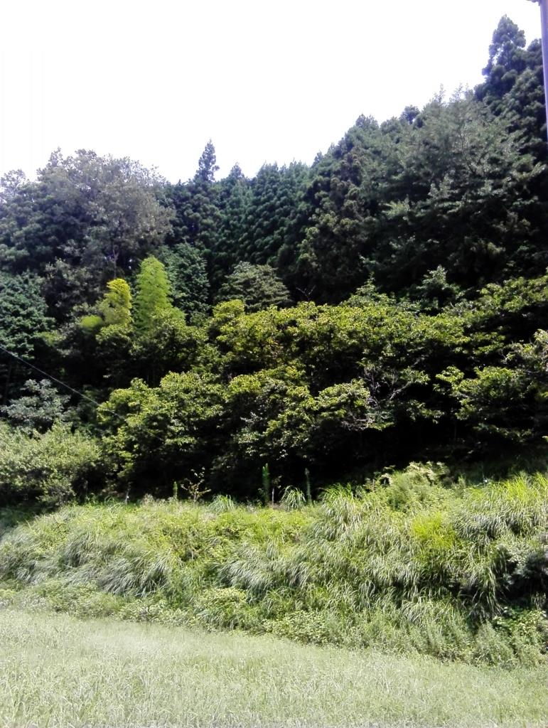 f:id:himawari87k:20170901103231j:plain
