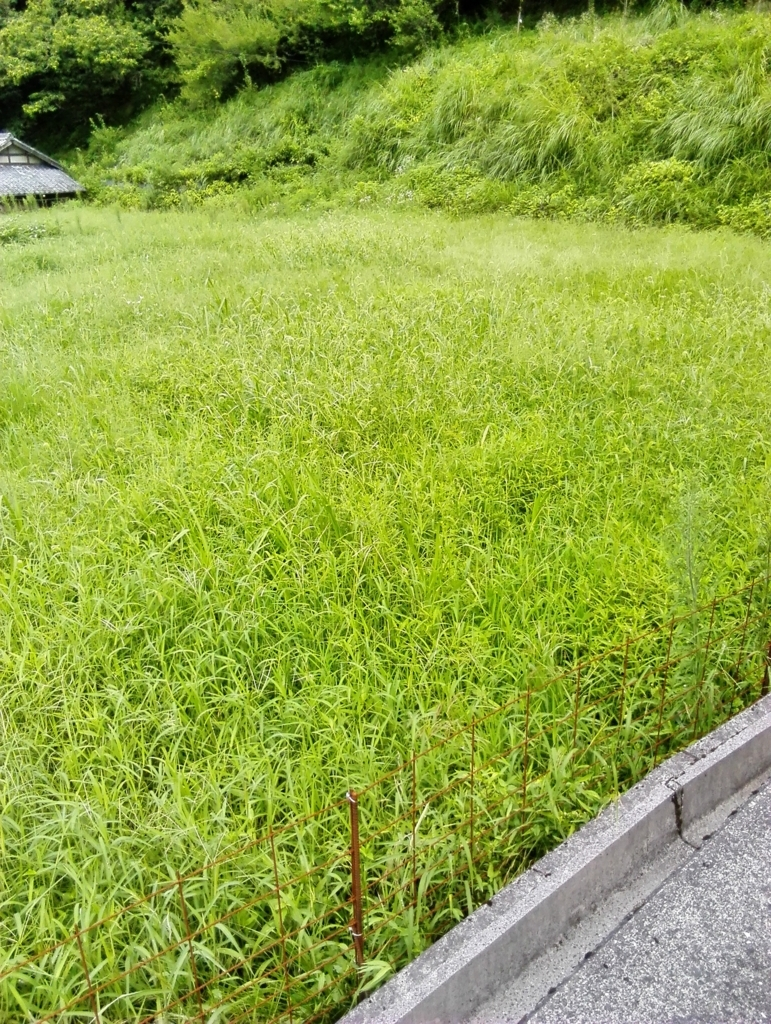 f:id:himawari87k:20170901103349j:plain