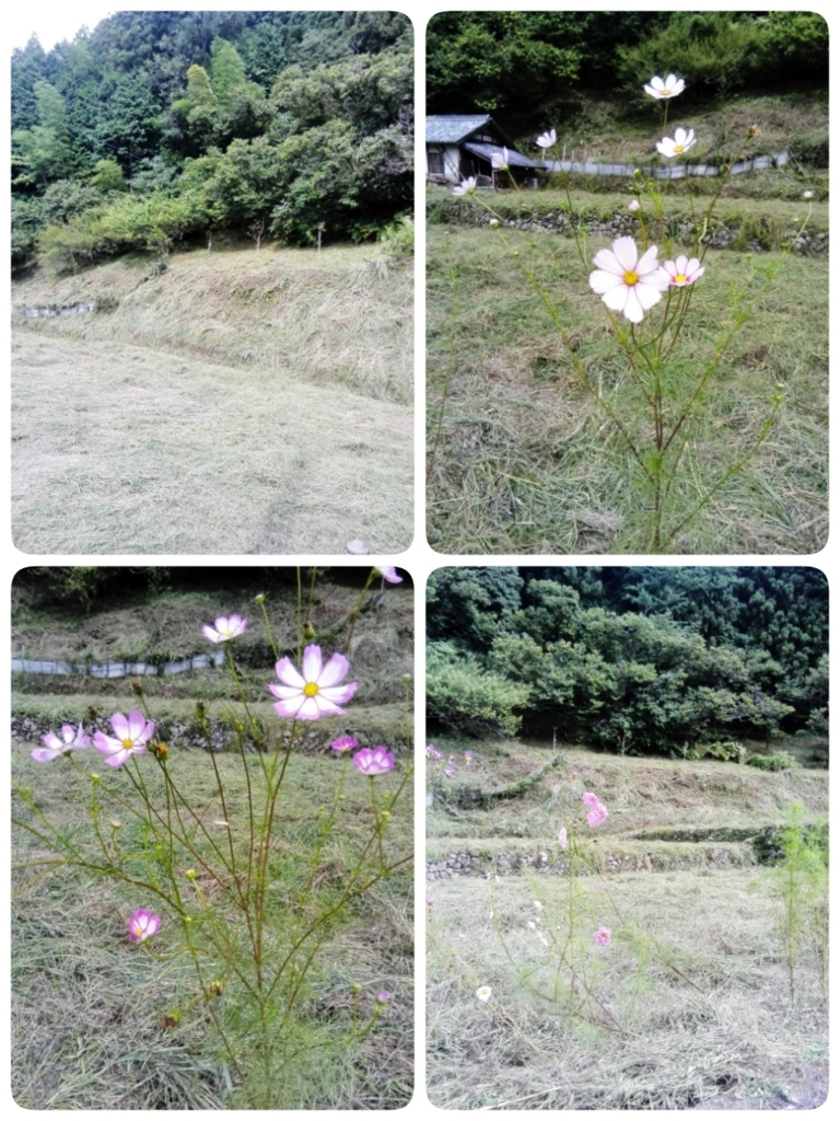 f:id:himawari87k:20170923182656j:plain