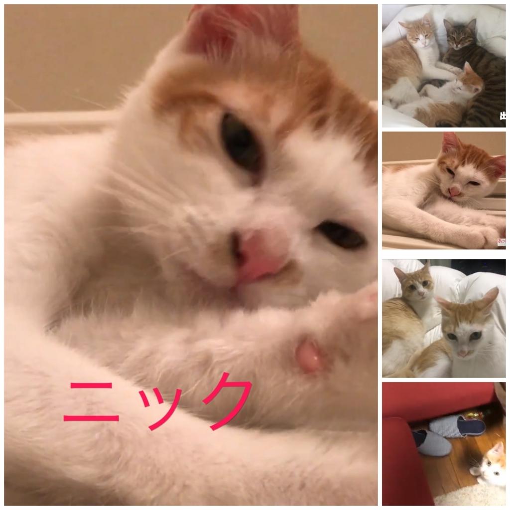f:id:himawari928:20170803054833j:plain