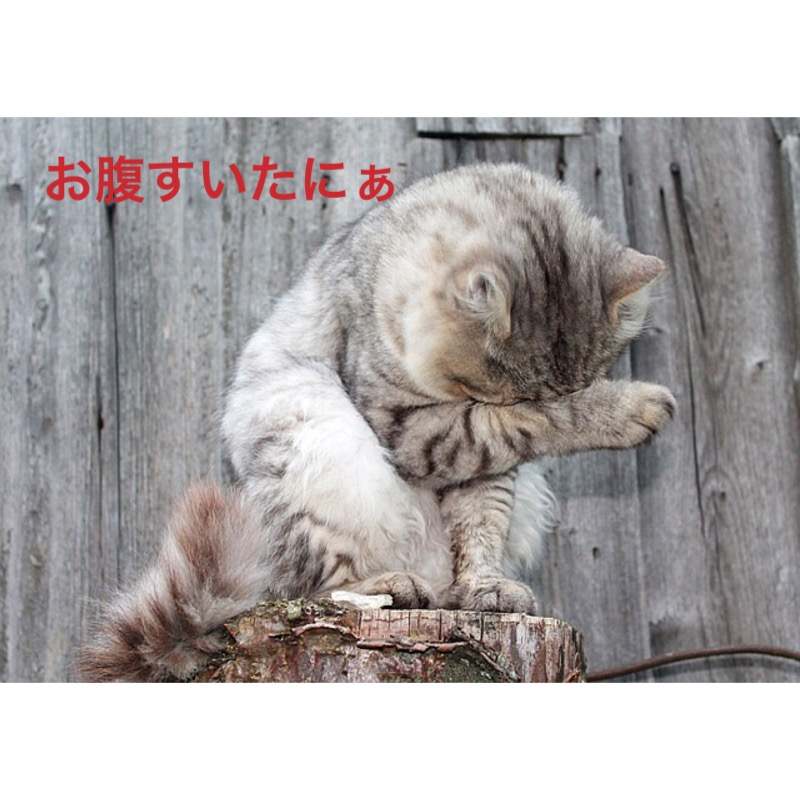 f:id:himawari928:20170910004625j:plain