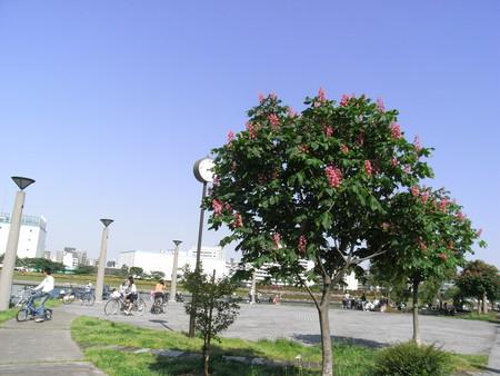 f:id:himekagura:20080506151034j:image