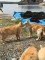 [猫島][青島][ねこだらけ]海の村2