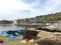 [猫島][青島][ねこだらけ]海の村