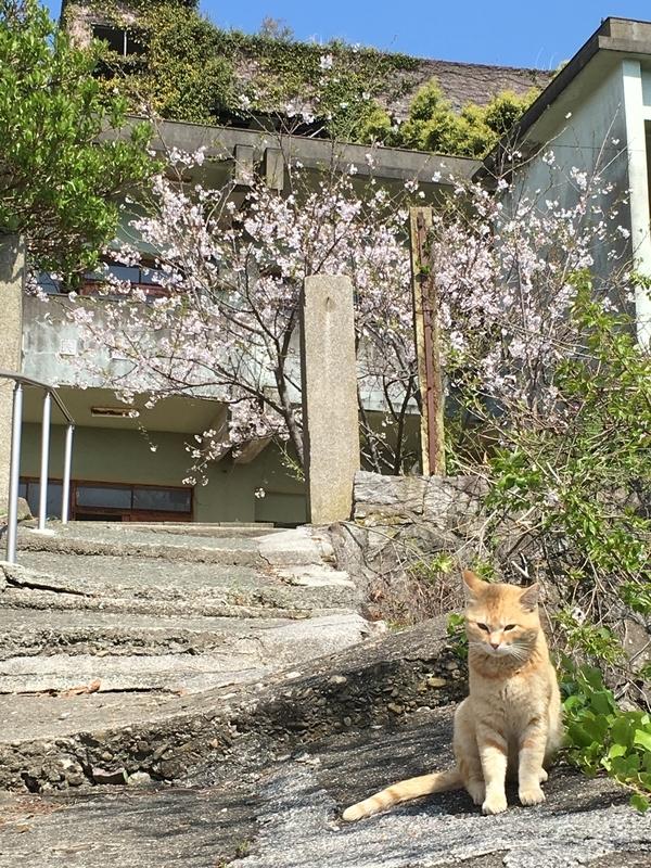 [猫島][青島][ねこだらけ]廃校