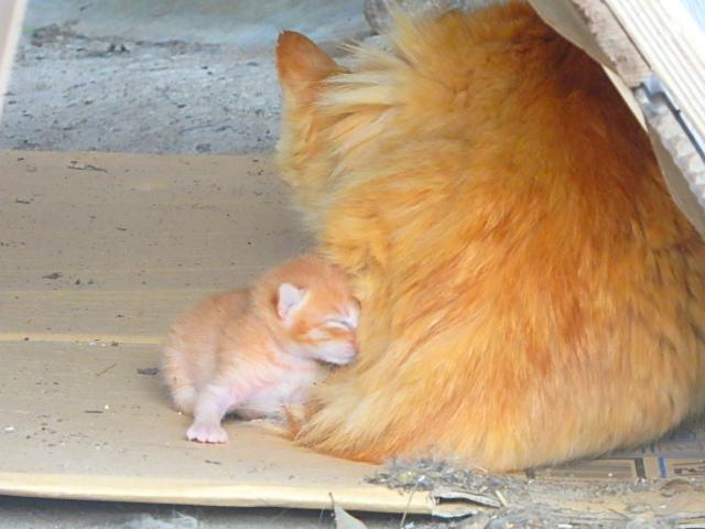 猫 産まれたばかり