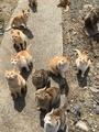 [猫島][青島][ねこだらけ][かわいい]群れ 2