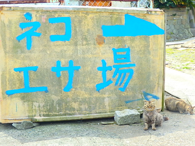 [猫島][青島][エサ場]猫島 青島 エサ場