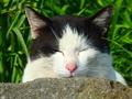 [猫島][青島]猫島 ネコ