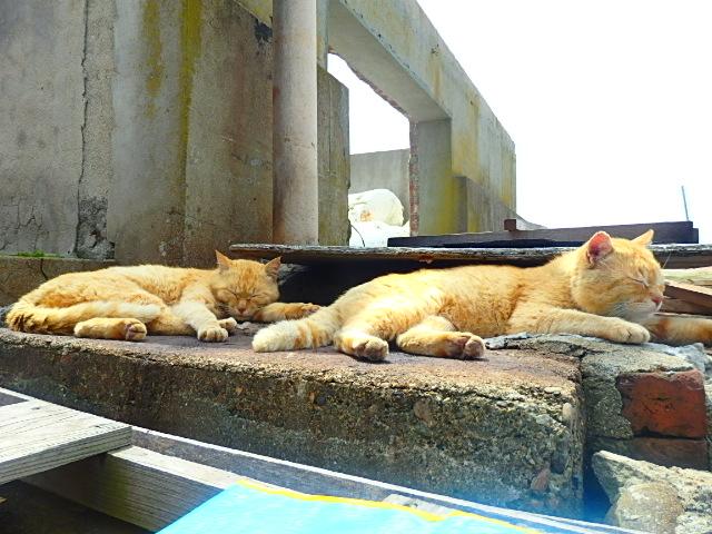 [猫島][青島]猫島 青島 ネコ
