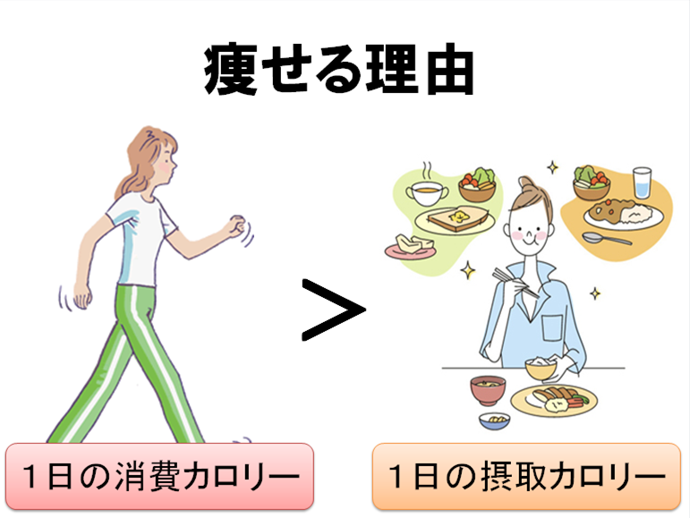 痩せる理由は1日の消費カロリー>摂取カロリー