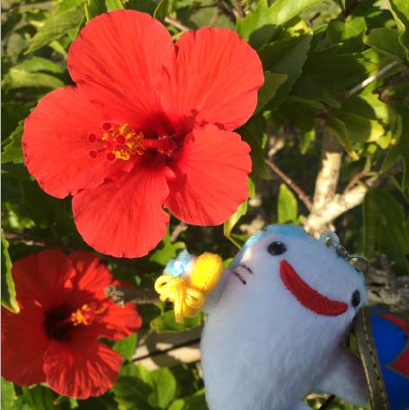 沖縄のハイビスカスとジンベイザメのマスコットの写真