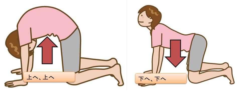 姿勢をよくする為、背骨を動かす