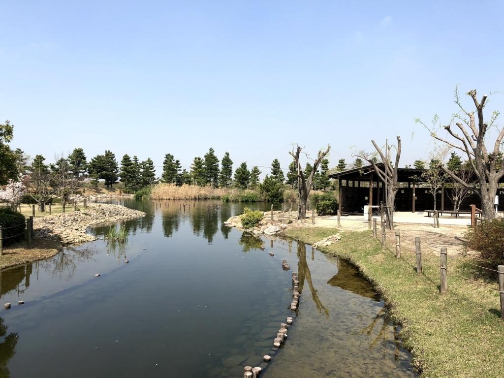 自然環境体験公園の沼