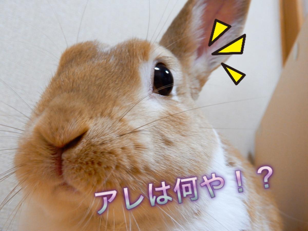 f:id:himitsunohana:20200619082857j:plain