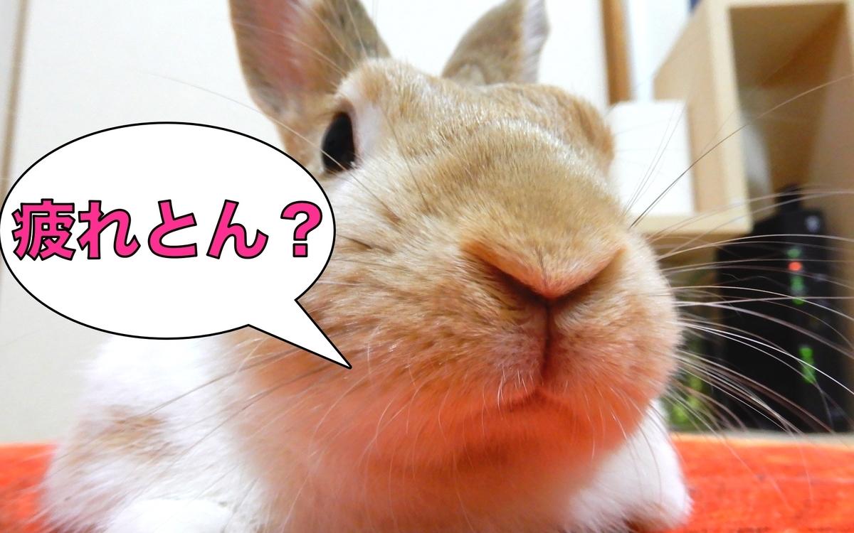 f:id:himitsunohana:20200811140925j:plain