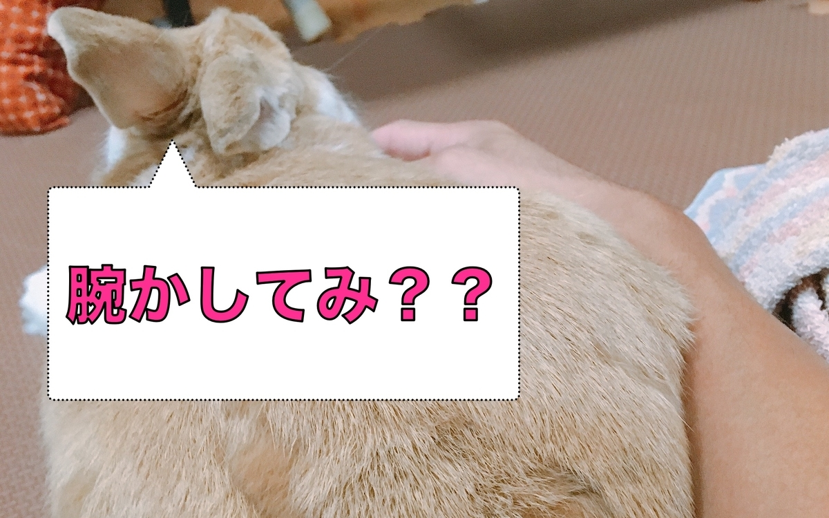 f:id:himitsunohana:20200811141831j:plain