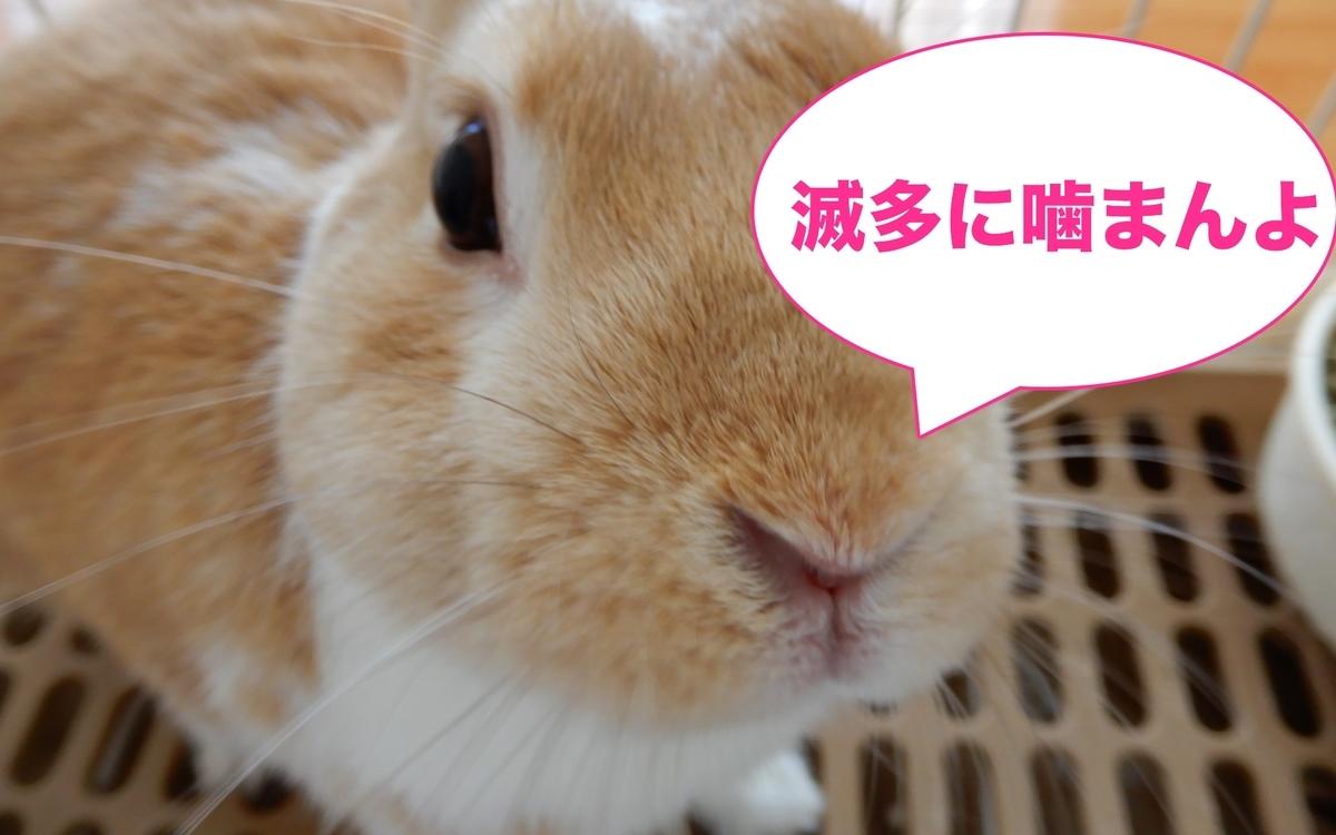 f:id:himitsunohana:20200815111759j:plain