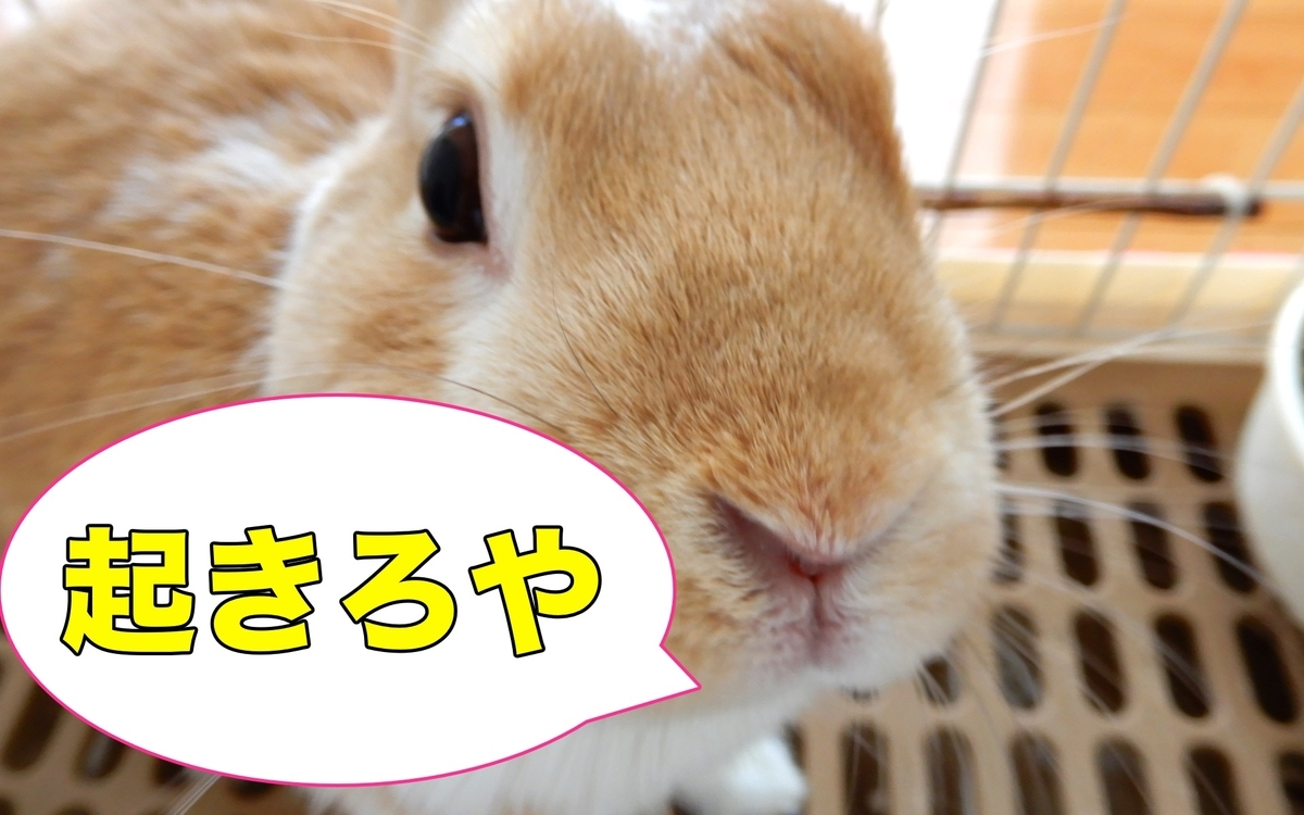f:id:himitsunohana:20200825200058j:plain