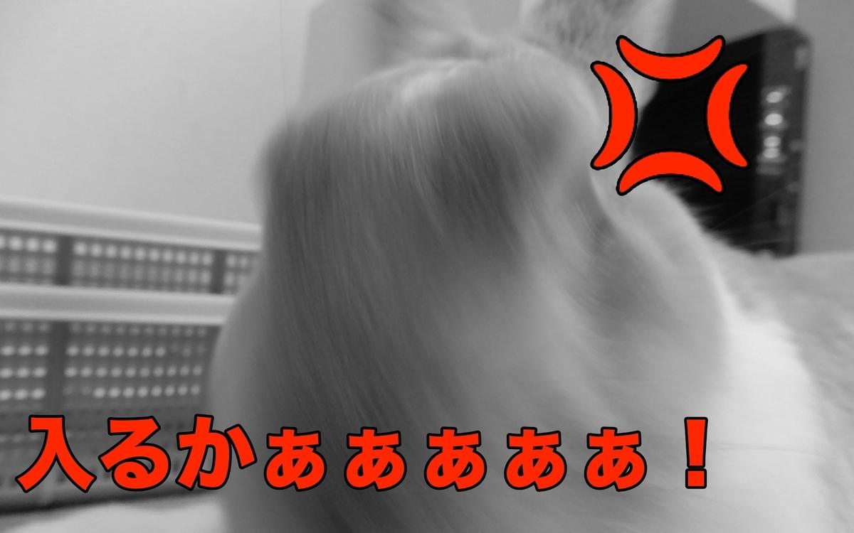 f:id:himitsunohana:20200908200135j:plain