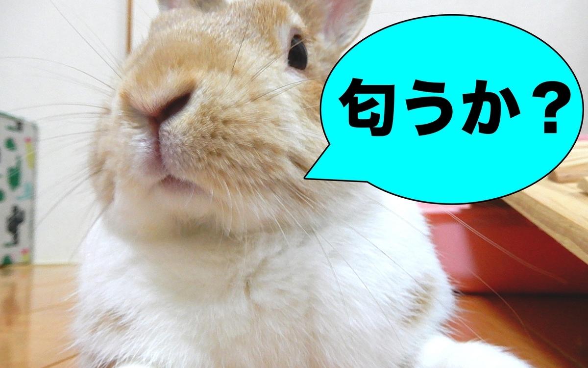 f:id:himitsunohana:20200915095343j:plain