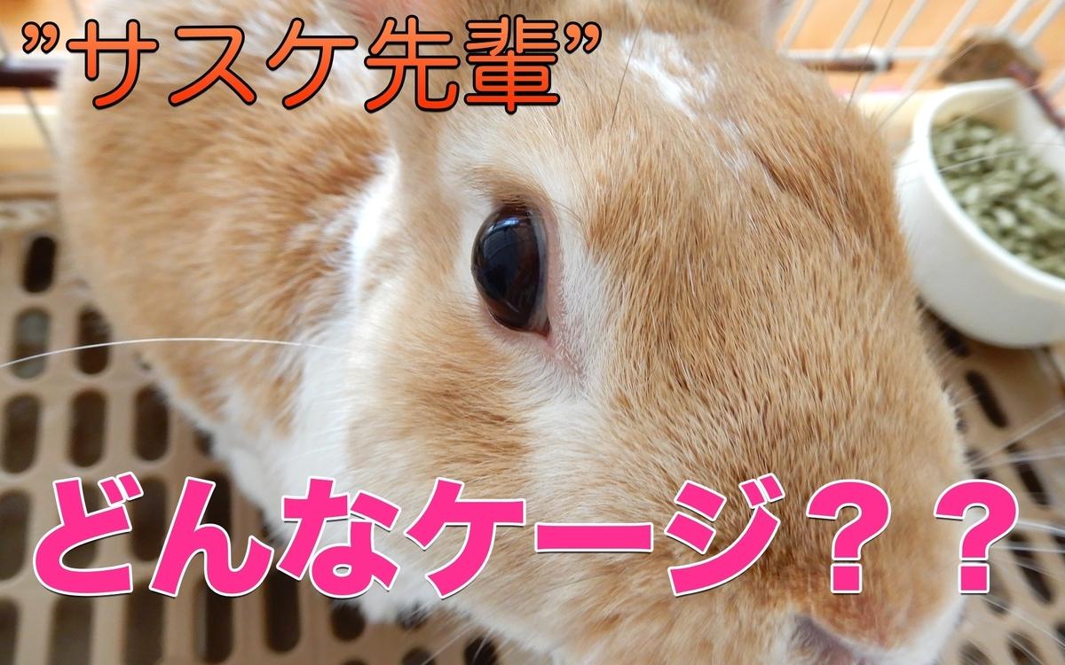 f:id:himitsunohana:20201027162311j:plain