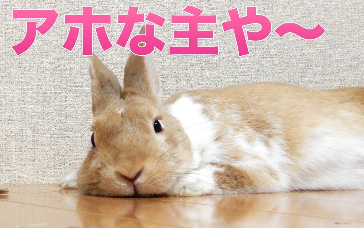 f:id:himitsunohana:20201109202213j:plain