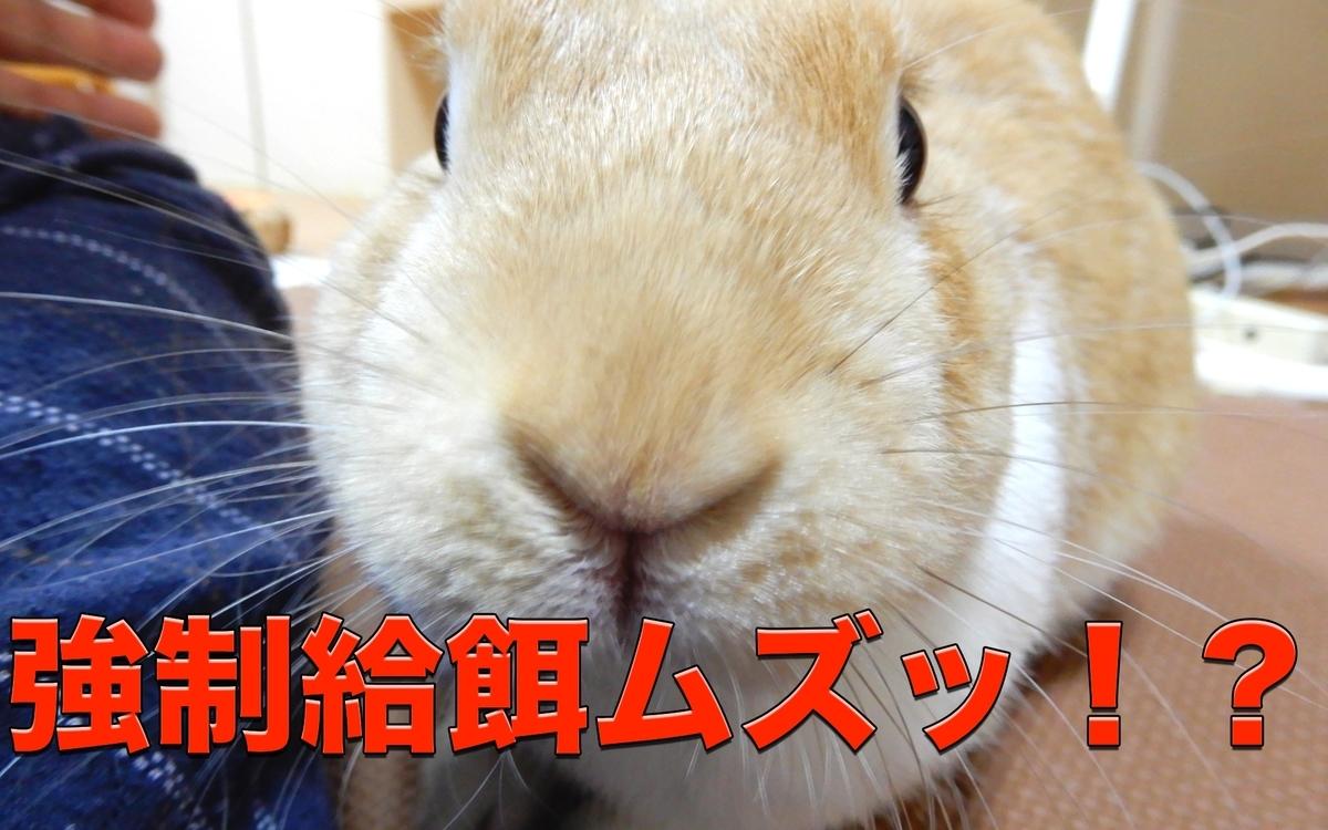 f:id:himitsunohana:20201208083551j:plain